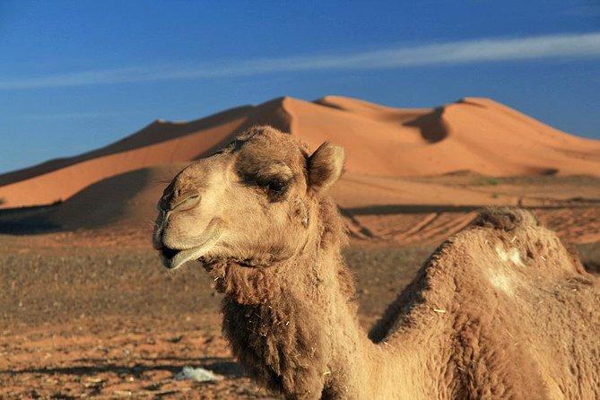 fes desert tour 2 days