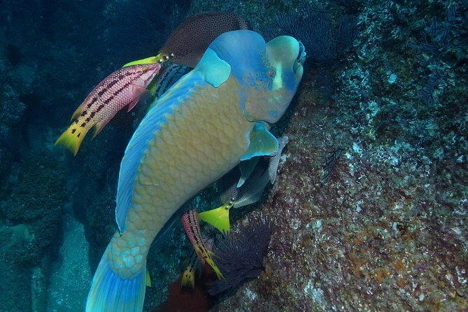 Cabo San Lucas Marine Park Snorkeling Tour with MANTA