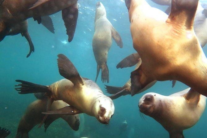 Sea Lions Snorkeling Adventure