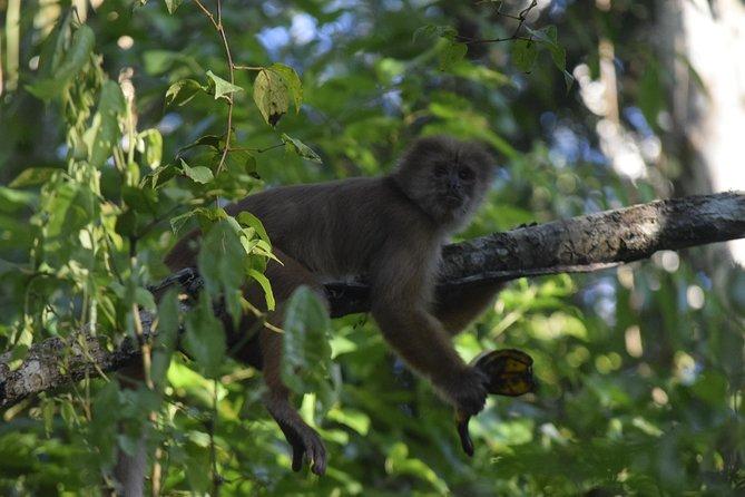 Monkey island , kayak , canopy bridge and zipline