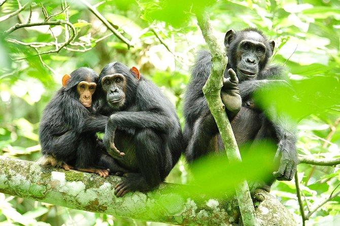 Gorilla Trekking and Wildlife Experience
