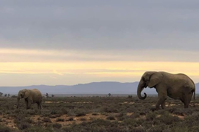 Cape Town Safari Transfers
