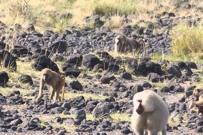 2 Days Wildlife Safari to Awash National Park