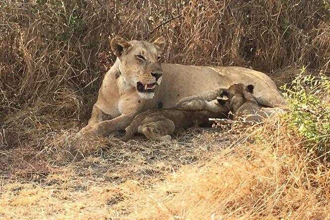 Affordable 1 night 2 days safari(Mikumi park)