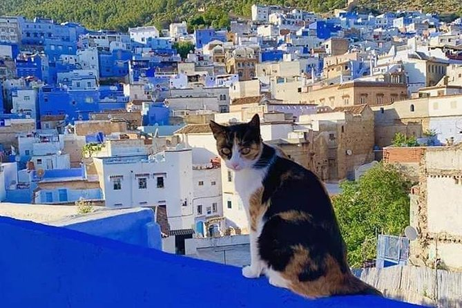 Full-day trip Akchour waterfalls and Chefchaouen
