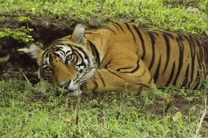 Wildlife with Taj Mahal, Delhi from Jaipur 2 Nights/3 Days