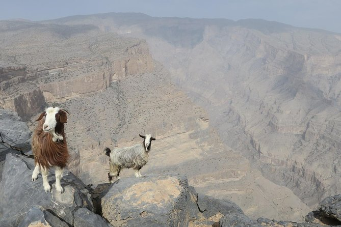 Jabal Shams (Grand Canyon) Tour