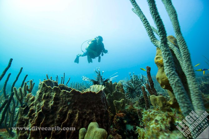 2-Tank Boat Dive from English Harbour