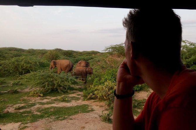 Morning Shared Safari at Bundala Park by La Safari Inn Tours. photo 1