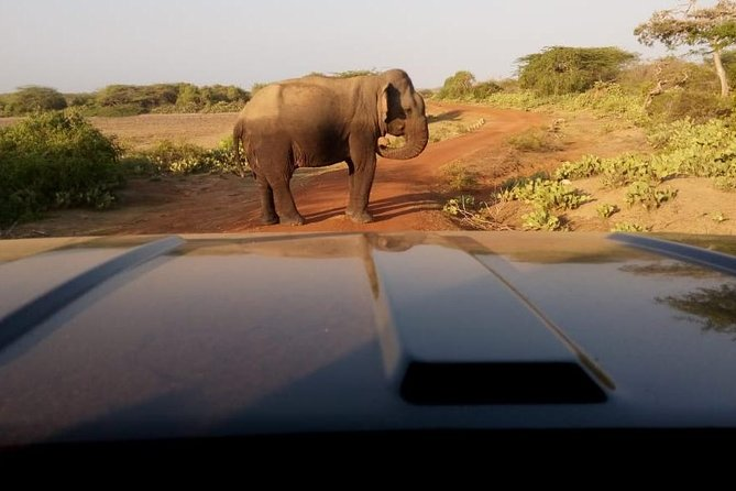 Morning Private Safari at Bundala Park by La Safari Inn Tours photo 6