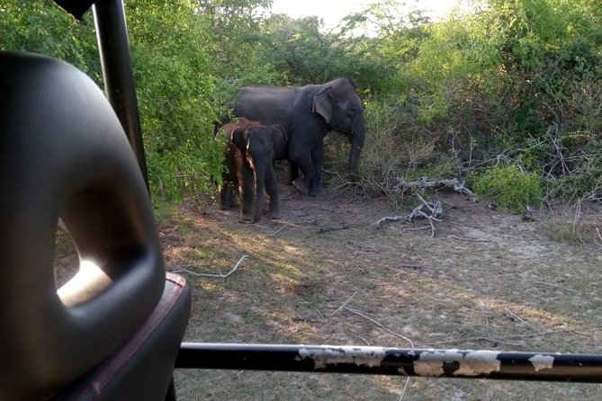 Morning Private Safari at Bundala Park by La Safari Inn Tours photo 3