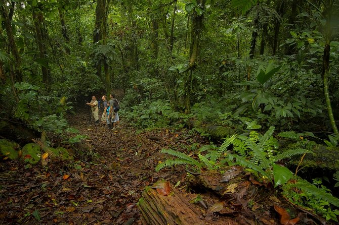 Jungle Expedition through The Childrens Eternal Rainforest