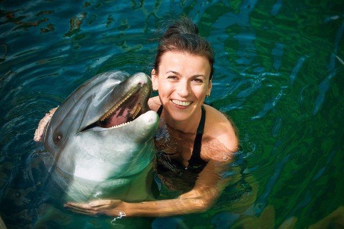 Tortola Dolphin Royal Swim