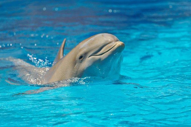 Mère Océan : un film stupéfiant sur une grossesse avec les dauphins