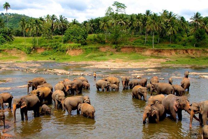 اماكن السياحة في كاندي ميتم الفيلة في كاندي