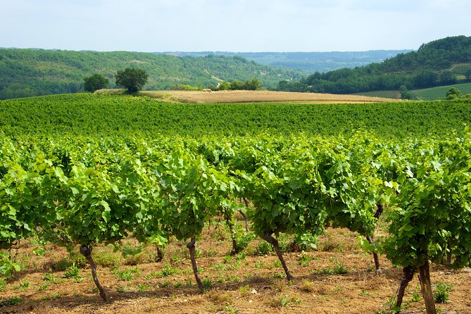 Private Tour: Fronton Wine Tasting Trip from Toulouse