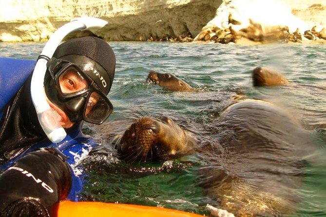 Snorkelen met zeeleeuwen in Punta Loma vanuit Puerto Madryn