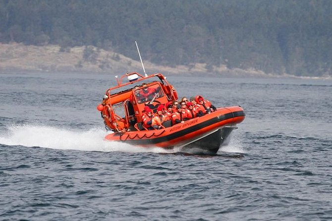 Tour de aventura de avistamiento de ballenas en Friday Harbor