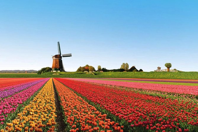 Private Day to the Tulip Field on the Flower Road