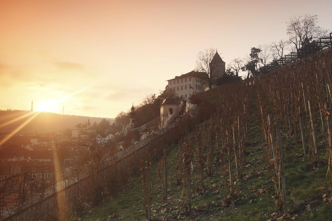 Tour and Wine Tasting at Prague's Oldest Vineyard