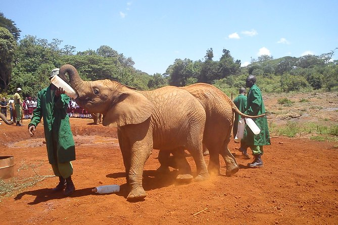 Day tours to David Sheldrick,Giraffe centre and Karen Blixen photo 5