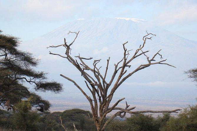 Day trip to Amboseli National Park