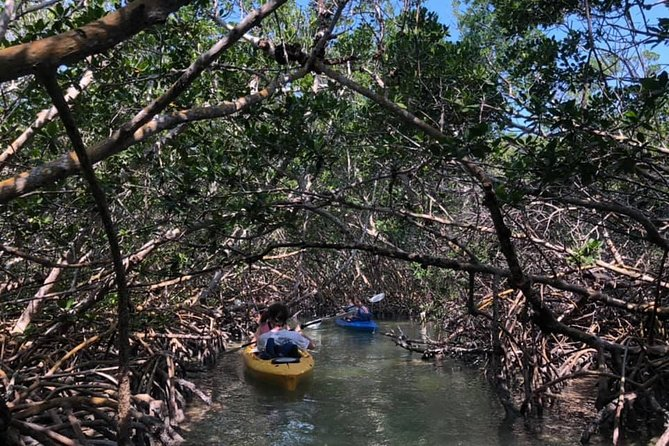 Key West Mangrove Kayak Eco Tour photo 4
