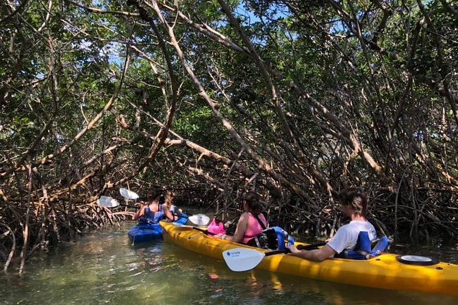 Key West Mangrove Kayak Eco Tour in Small-Group photo 2