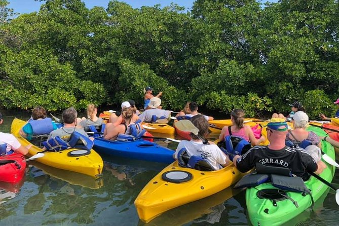 Key West Mangrove Kayak Eco Tour in Small-Group photo 3