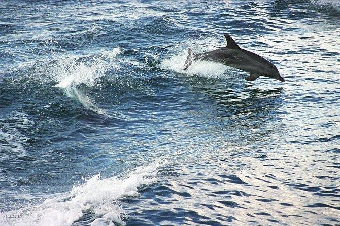 Tagesausflug zur Südküste von Sydney mit Jervis Bay Delfinbeobachtungs-Bootstour