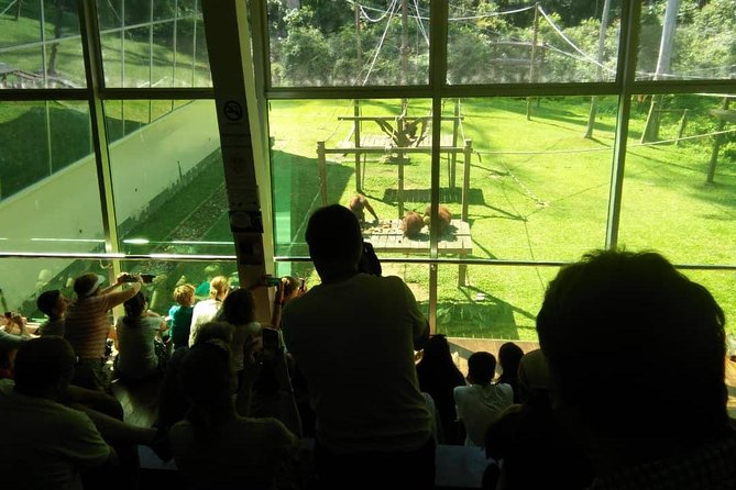 Private Full Day Sepilok Orang Utan, Bornean Sun Bear and Rainforest Discovery Center Tour photo 3