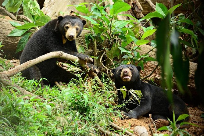 Private Full Day Sepilok Orang Utan, Bornean Sun Bear and Rainforest Discovery Center Tour photo 9