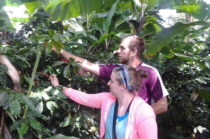 kilimanjaro coffee tour and waterfalls