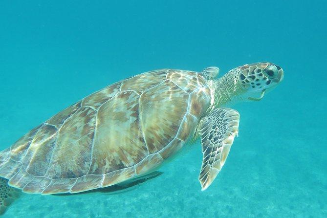 Small Group Sea Turtle Tour (Guaranteed to see turtles)