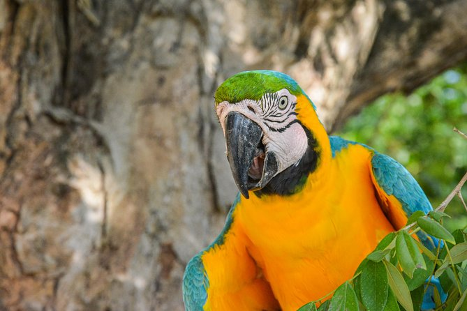 Birdwatching & Photography experience at the National Aviary in Barú