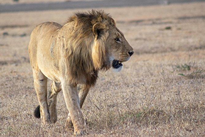 4 Day Safari Lake Manyara, Serengeti, and Ngorongoro Crater