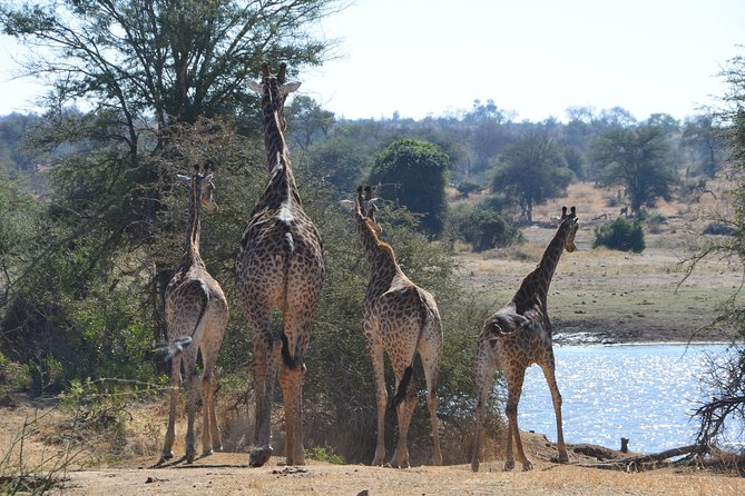 2 Days Budget Kruger Park Safari - From Johannesburg