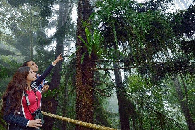 Kinabalu Park Tour With Poring Hot Springs From Kota Kinabalu
