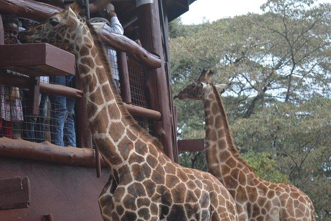 Giraffe Centre and David Sheldrick Elephants orphanage Tour