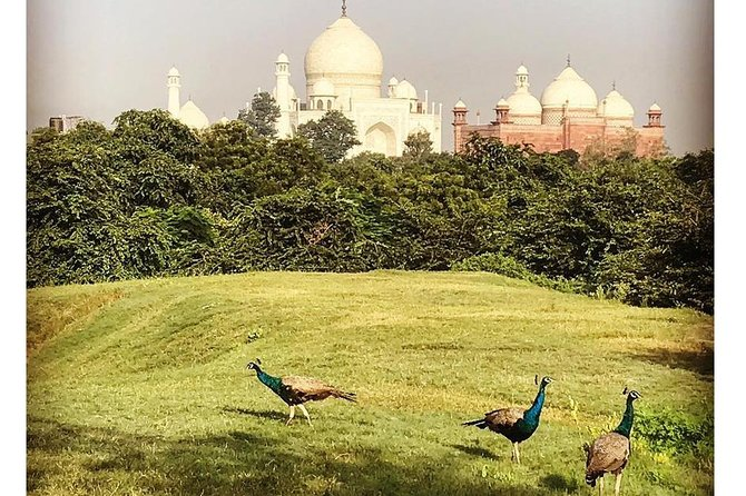 Taj Nature Walk photo 15