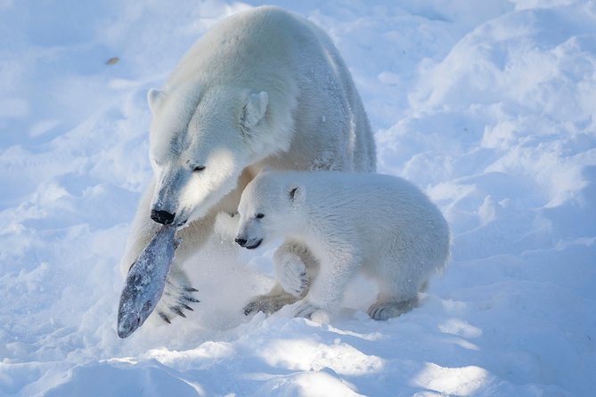 Ranua Wildlife Park Day : Visit the Arctic Animals!
