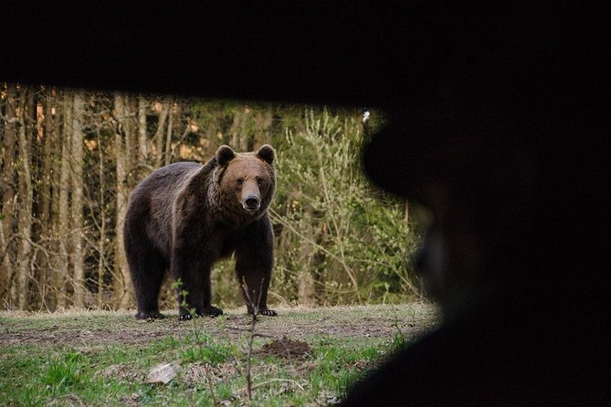 Bear watching in the Land of Volcanoes