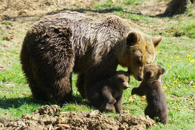 Libearty Bear Sanctuary and Dracula's Castle - Day Tour from Bucharest