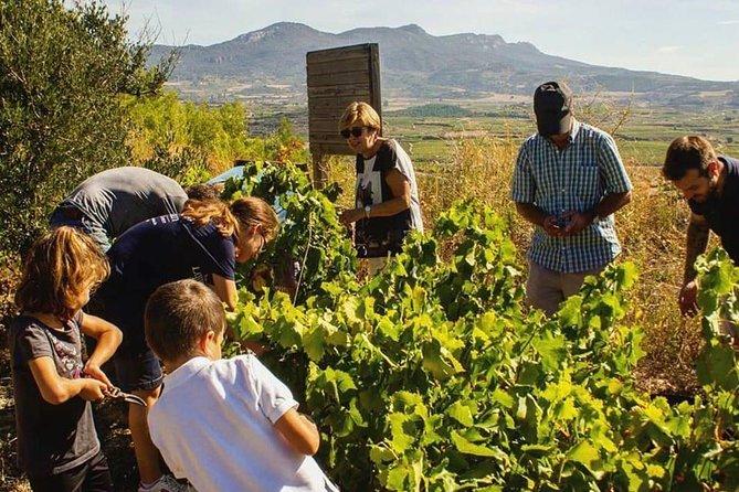 Harvest Experience in Rioja Wine Region