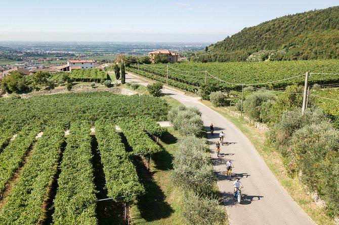 Valpolicella e-bike Harvest