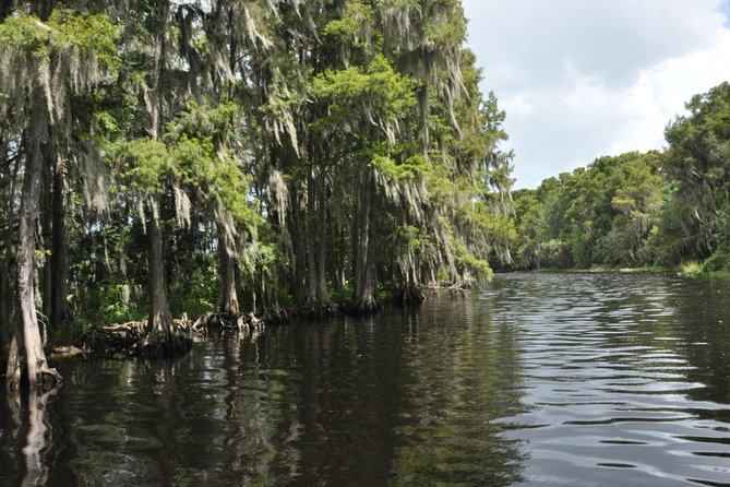 90-min Everglades Airboat Tour Central Florida photo 8