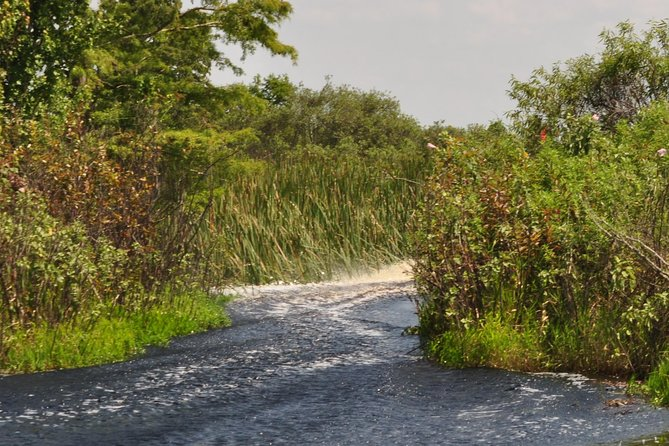 90-min Everglades Airboat Tour Central Florida photo 3