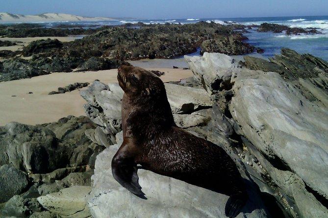 Guided Marine Walk: - Sardinia Bay (Marine Protected Area) - 3 hours