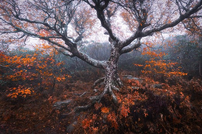 The Great Craggy Tree