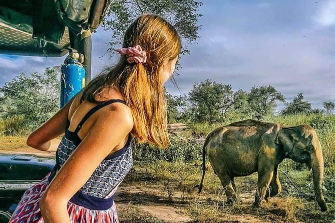 Day Excursions to Minneriya National Park From Negombo